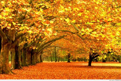 Xúc cảm mùa thu